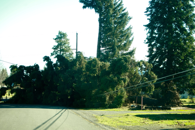 Photo of tree on power lines